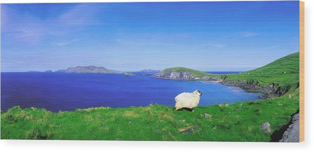 Beauty In Nature Wood Print featuring the photograph Dunmore Head, Blasket Islands, Dingle by The Irish Image Collection