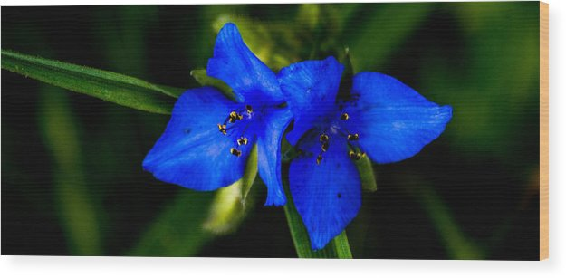 Wood Print featuring the photograph Azure by Joe Bledsoe