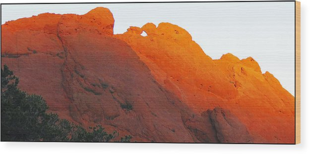 Kissing Camels Wood Print featuring the photograph Kissing Camels by Darlene Grubbs