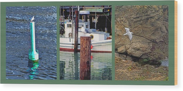 Seagull Wood Print featuring the photograph Seagull Triptych by Steve Ohlsen