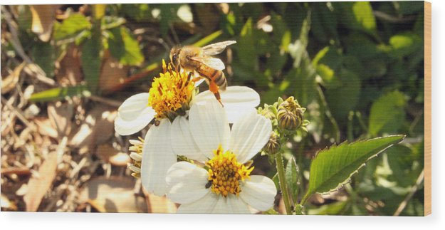 Bee Photography Wood Print featuring the photograph Busy Bee by Evelyn Patrick