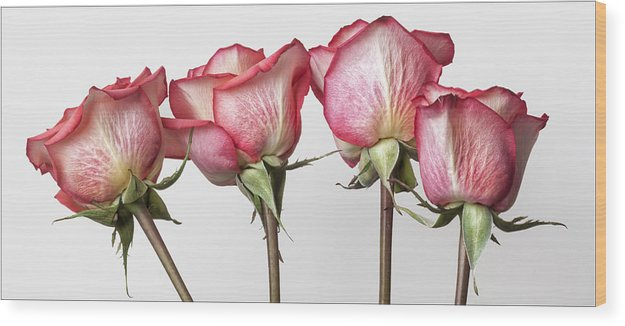 Rose Wood Print featuring the photograph Roses by Robert Ullmann