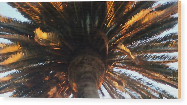Palm Wood Print featuring the photograph Palm Tree Canopy 0558 by Edward Ruth