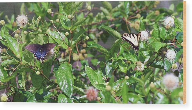 Butterfly Wood Print featuring the photograph 091707-1 Neighbors by Mike Davis