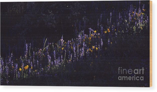 Lupine Wood Print featuring the photograph A Streak Of Nature by Randy Oberg
