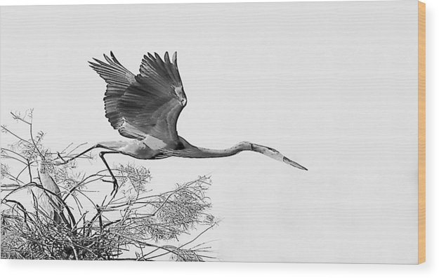 Wood Print featuring the photograph On The Wing by Joseph Reilly