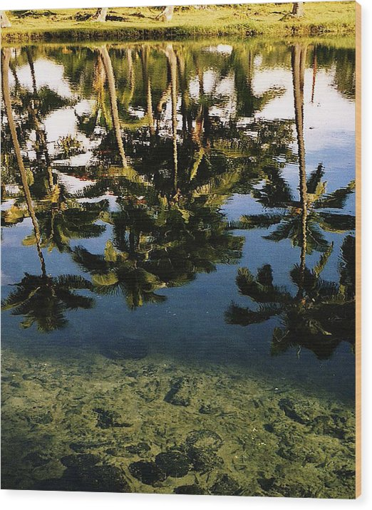 Palms Wood Print featuring the photograph Reflected Palms by Michael Lewis