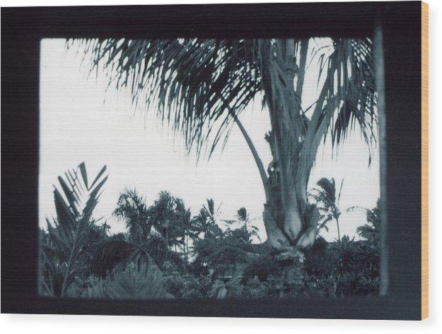 Palm Tree Wood Print featuring the photograph Window to Paradise by Jennifer Ott