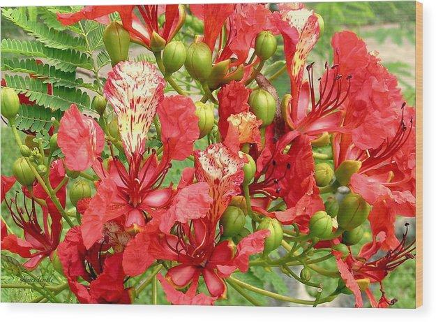 Hawaiian Royal Poinciana Wood Print featuring the photograph Hawaiian Royal Poinciana by James Temple