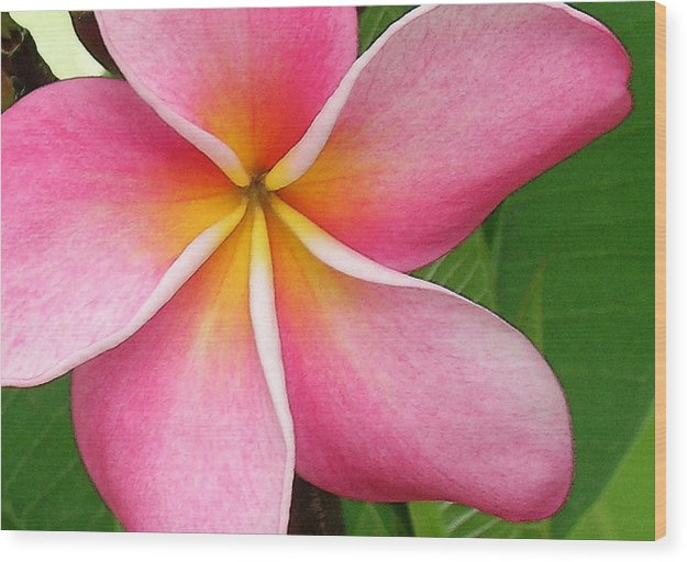 Hawaii Iphone Cases Wood Print featuring the photograph April Plumeria by James Temple