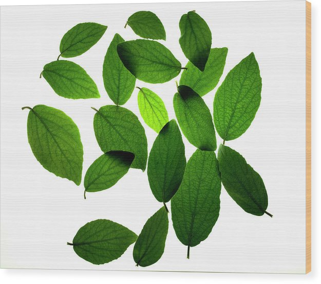 Leaves Wood Print featuring the photograph Leaves on White by Jessica Wakefield