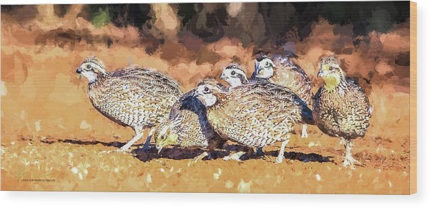 Northern Bobwhite Wood Print featuring the digital art Northern Bobwhite Digital Art by Carol Fox Henrichs