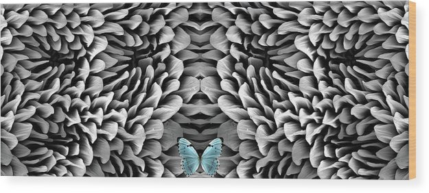 Microscope Wood Print featuring the photograph Blue Butterfly And Antenna by Sheri Neva