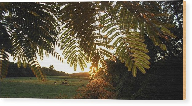 Trees Wood Print featuring the photograph Pasture at Sunrise by Caroline Eve Urbania