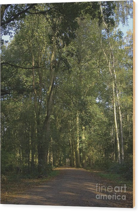 Woodland Wood Print featuring the photograph Forest Path 1 by Steev Stamford