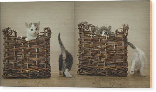Kittens Wood Print featuring the photograph Exchange by Inesa Kayuta