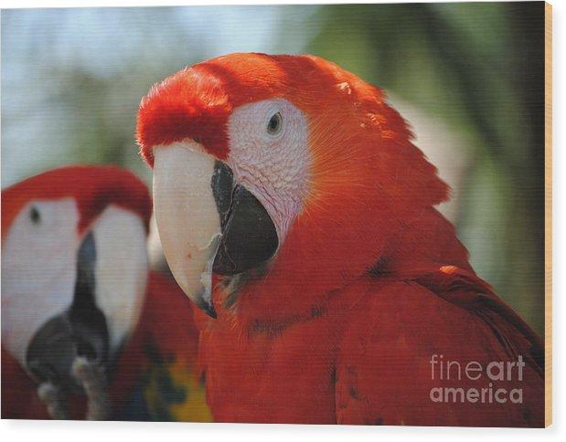 Parrot Wood Print featuring the photograph Parrots by Joep Egmond