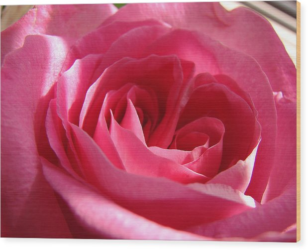 Wood Print featuring the photograph Pink by Luciana Seymour
