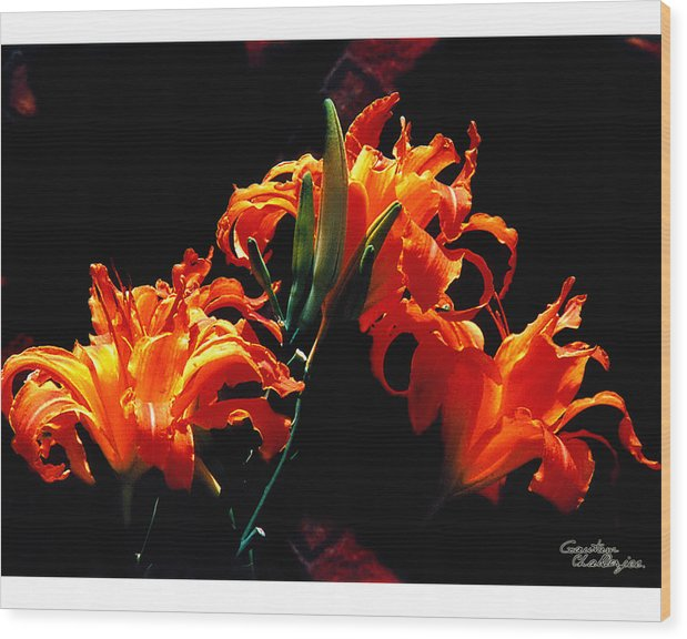 Flower Wood Print featuring the photograph The Flower Of Fire by Gautam Chatterjee