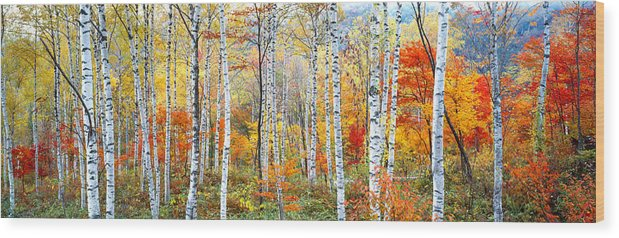 Photography Wood Print featuring the photograph Fall Trees, Shinhodaka, Gifu, Japan by Panoramic Images