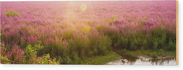Purple Loosestrife Wood Print featuring the photograph Summer Light by Kunal Mehra