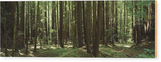 Photography Wood Print featuring the photograph Redwood Trees Armstrong Redwoods St by Panoramic Images