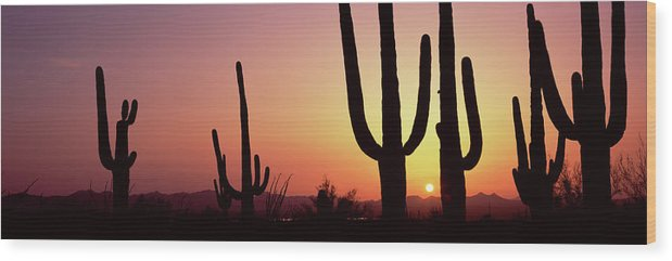Photography Wood Print featuring the photograph Silhouette Of Saguaro Cacti Carnegiea by Panoramic Images