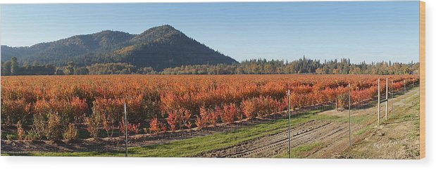 Panorama Wood Print featuring the photograph Autumn Blueberry Panorama by Mick Anderson