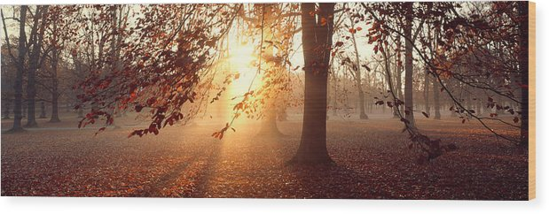 Photography Wood Print featuring the photograph Beech Trees Uppland Sweden by Panoramic Images