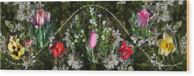 Spring Wood Print featuring the photograph Spring Flower Pano by Cheryl Mills