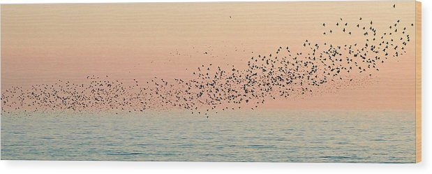 Birds Wood Print featuring the photograph Starlings by Cath Dupuy
