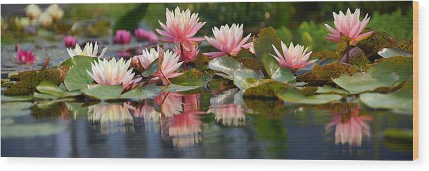 Water Lily Wood Print featuring the photograph Water Lily Profusion by Leda Robertson