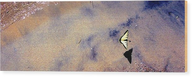 Water Wood Print featuring the photograph Butterfly And Sand 42 Db by Lyle Crump