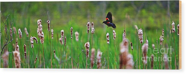 Sun Wood Print featuring the photograph Flying Amongst Cattails by James F Towne