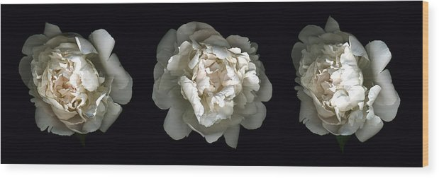 Scanography Wood Print featuring the photograph Peony Tryptic by Deborah J Humphries