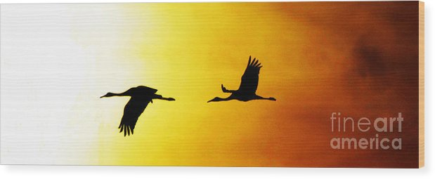 Ron Tackett Wood Print featuring the digital art Sandhill Cranes In Flight by Ron Tackett