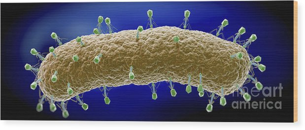 Ill Wood Print featuring the photograph Bacteriophages by Science Picture Co