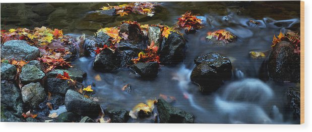 Landscape Wood Print featuring the photograph Maple Leaves-0002 by Sean Shaw