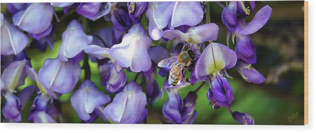 Wisteria Wood Print featuring the photograph Wisteria Bee by Rick Lawler