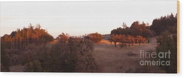 Orange Wood Print featuring the photograph Autumn Light by JoAnn SkyWatcher