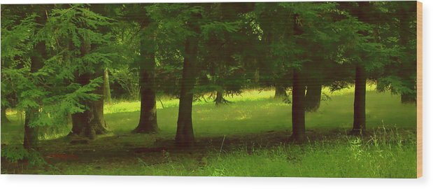 Nature Wood Print featuring the photograph Enchanted Forest by Linda Sannuti