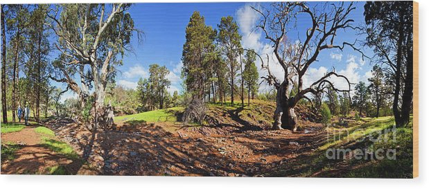 Sacred Canyon Flinders Ranges South Australia Australian Landscape Pano Panorama Outback Spring Wood Print featuring the photograph Sacred Canyon, Flinders Ranges by Bill Robinson