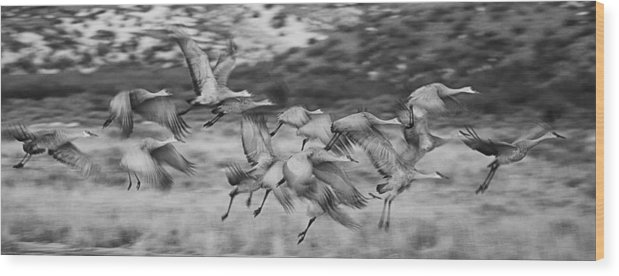Sandhill Cranes Wood Print featuring the photograph Sandhill Cranes by Bob Ayre