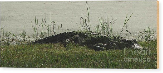 Gator Wood Print featuring the photograph Gator by Judy Waller