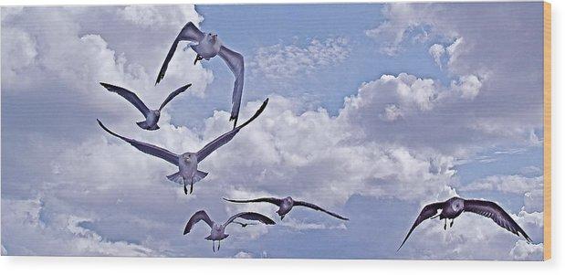 Gulls Wood Print featuring the photograph Gulls Will Be Gulls by Mike Shepley DA Edin