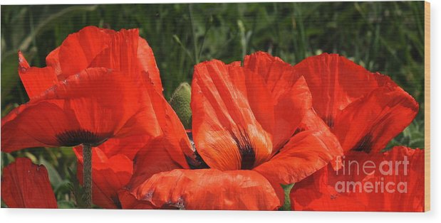 Poppies Wood Print featuring the photograph Poppies by Patrick Short
