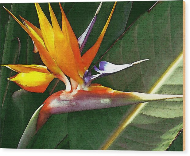 Bird Of Paradise Wood Print featuring the photograph Crane Flower by James Temple
