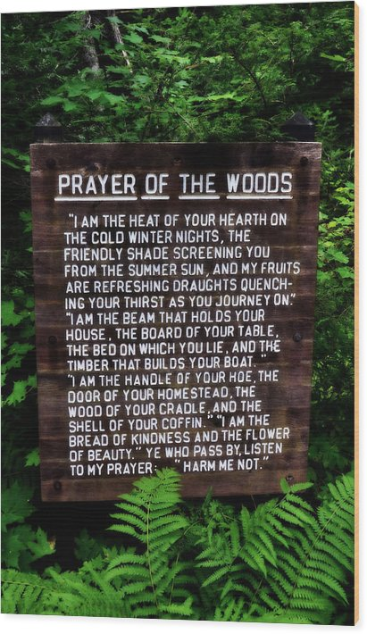 Prayer of the Woods by Michelle Calkins