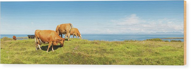 Water's Edge Wood Print featuring the photograph Cattle Grazing In Picturesque Meadow by Fotovoyager