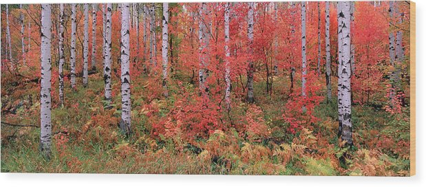 Panoramic Wood Print featuring the photograph The Wasatch Mountain Forest Of Maple by Mint Images - David Schultz